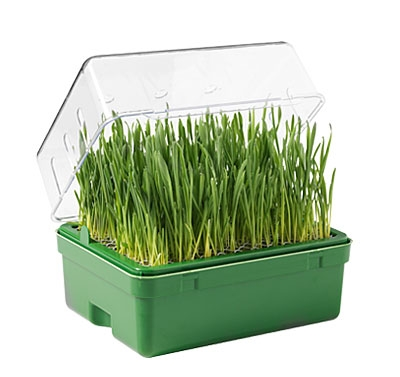 """Vorteilspack Das Grüne Gewächshaus """"Joschua"""" bestehend aus 2 Mini-Gewächshäuser und insgesamt 12 Packungen mit Saatgutmischung"""